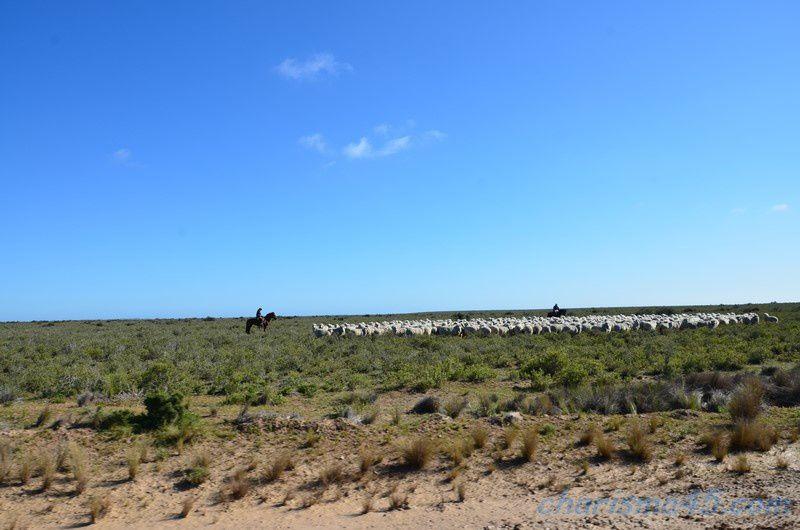 Punta Ninfas  (Argentine en camping-car)
