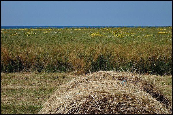Normandie à Vélo : Veules les Roses