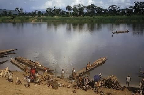 Centrafrique: Une affection inconnue décime les poissons sans écailles dans la région de la Sangha Mbaéré