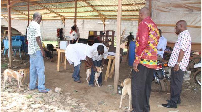 Des chiens volés pour être cuisinés dans les rues de Bangui en Centrafrique