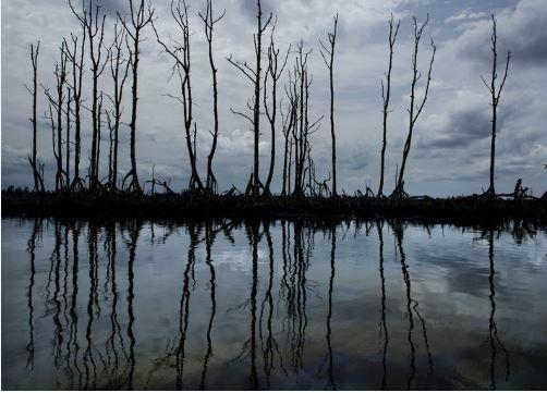 Lu pour vous : Le delta du Niger ravagé par le venin du pétrole (début et fin)