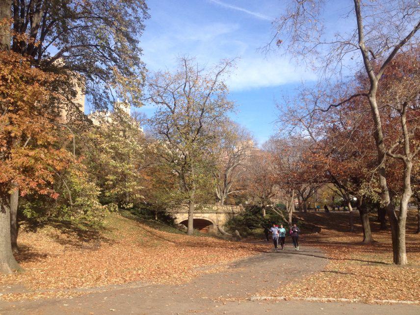 Central Park sous ... les feuilles (pas encore de neige à NYC)