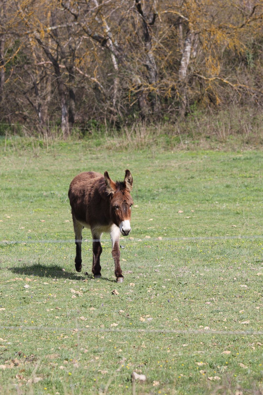 le chaval a des brins d'herbe au museau!