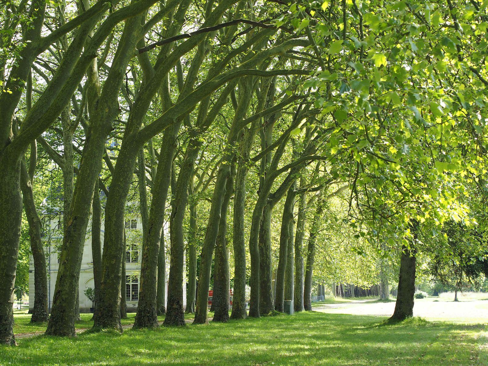 Le parc de Richelieu  d'une superficie de 475 hectares