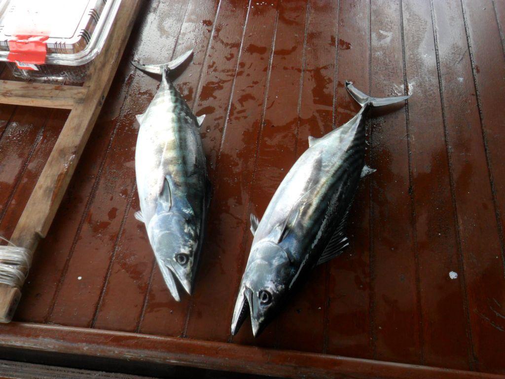 Istanbul : Pêche à la pélamide sur le Bosphore