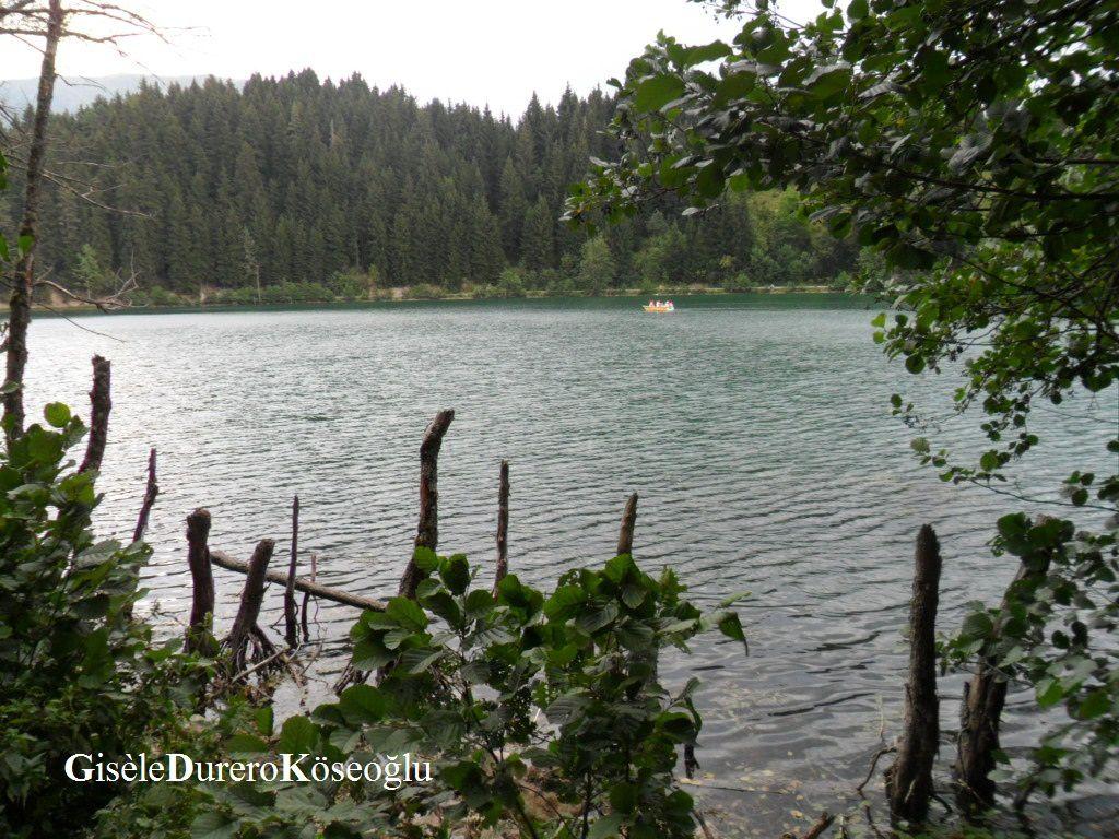 Pâturages, Şavşat, Borçka, Camili : Turquie verte