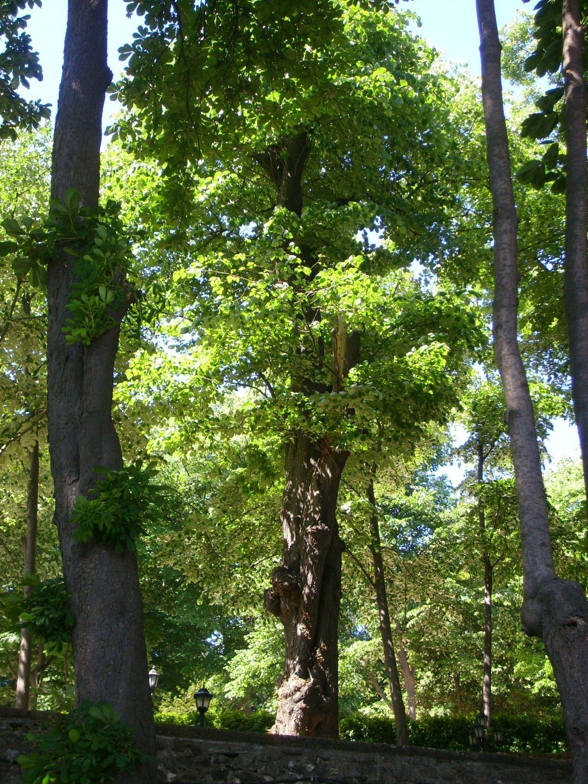 Les arbres majestueux du parc de Tarabya, à Istanbul