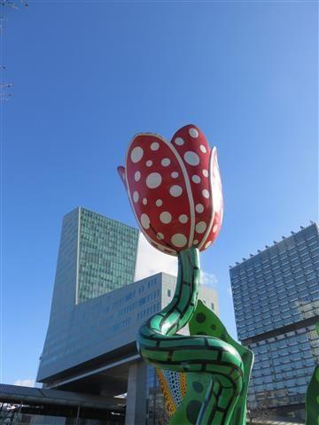 Fleur lilloise
