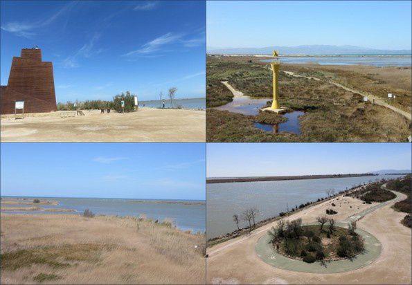 Dans le delta de l'Ebre (Espagne 2015-4)