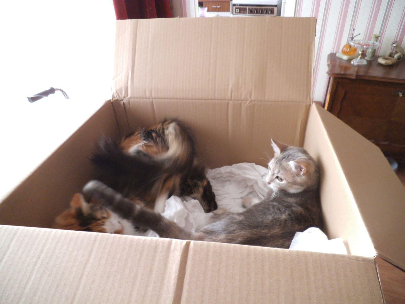une vie de chats