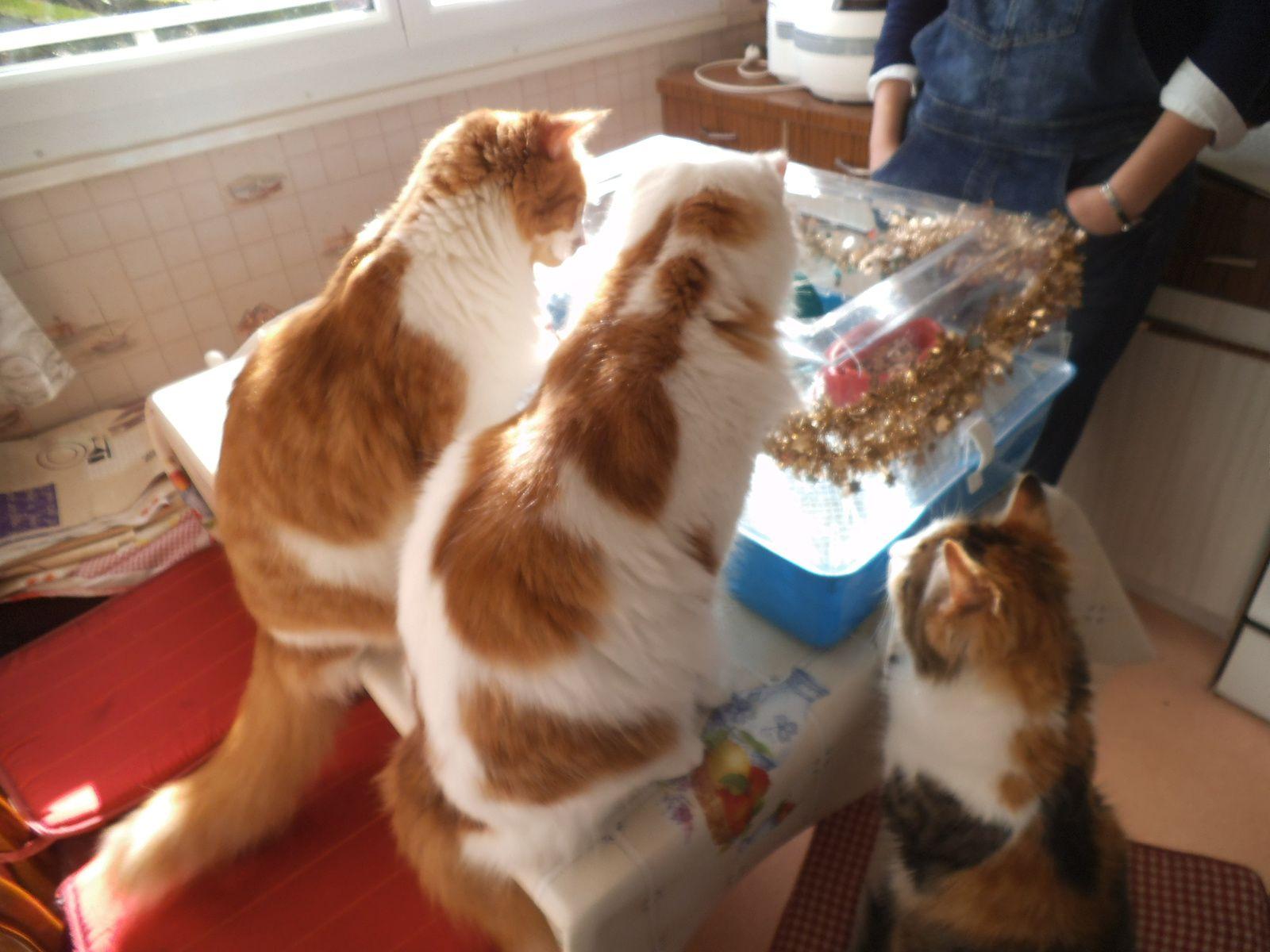 des petits invités qui troublent mes chats