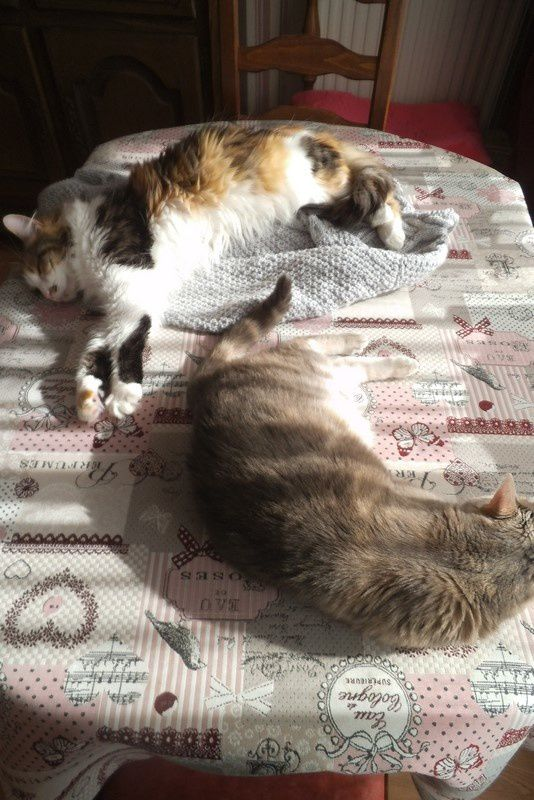 Les filles au soleil