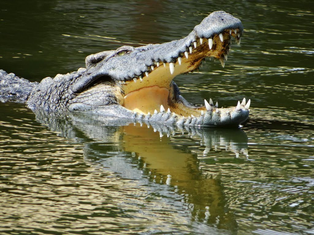 CROCODILES - VIDEOS INSOLITES