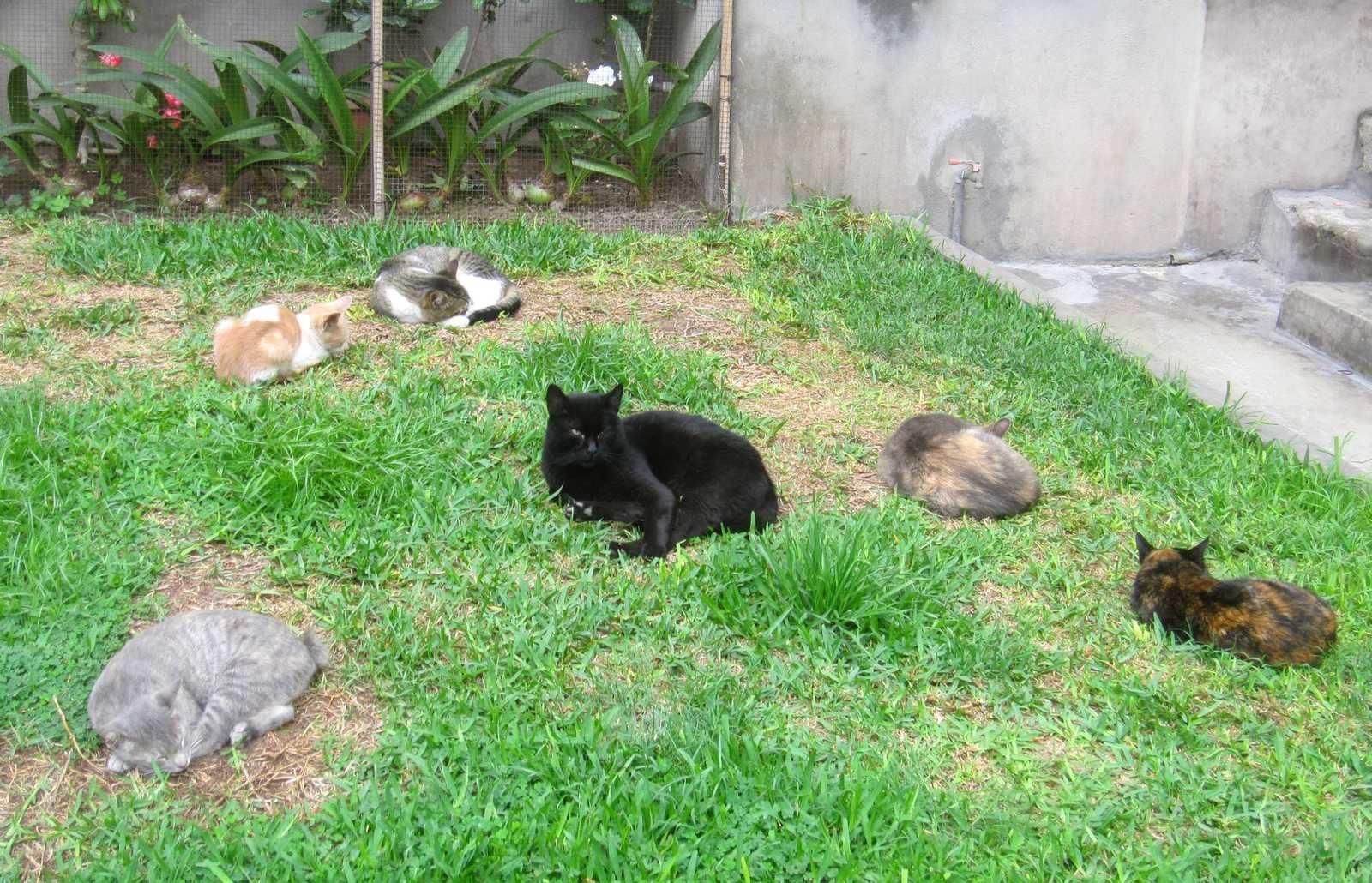Los gatos del parque Kennedy: de dia