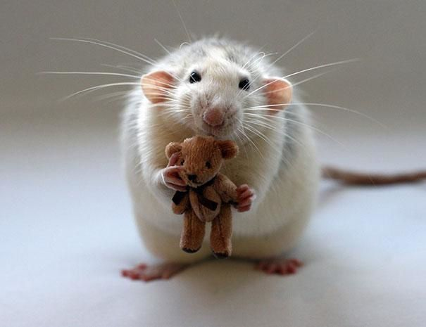 Pour faire suite à l'histoire de &quot&#x3B;la petite souris des dents&quot&#x3B;...