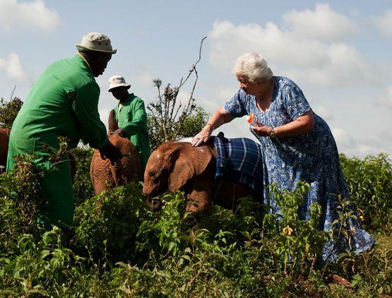 TRES BEAU EXEMPLE CETTE FEMME POUR LES ELEPHANTS!!