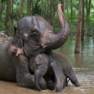 LES PLUS BEAUX CÂLINS ANIMALS!!!