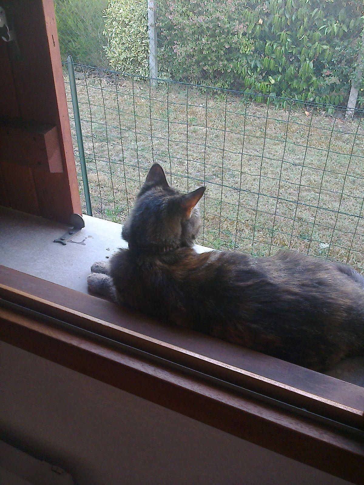 Pépita a commencer a trouver son endroit qu'elle aime le rebord d'une fenêtre vue sur les jardins autour de la maison!!!