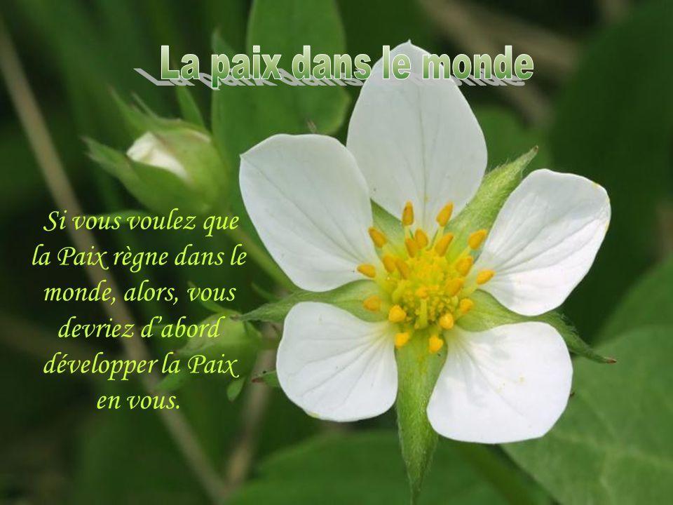 MESSAGE DE SAGESSE UNIVERSELLE!!!
