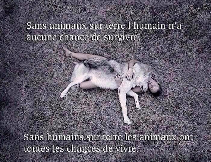 UNE VIDEO  QUI MONTRE LE COURAGE D'ANIMAUX ENVERS NOUS HUMAIN!!!