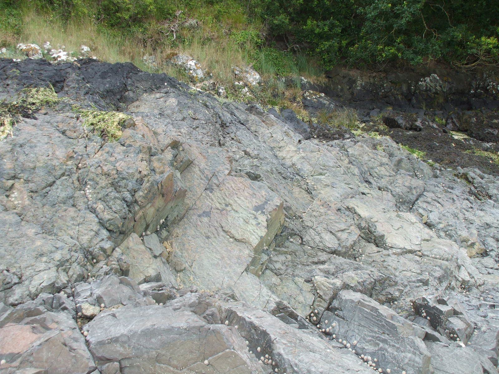 Pillow-lavas sur les bords du Trieux