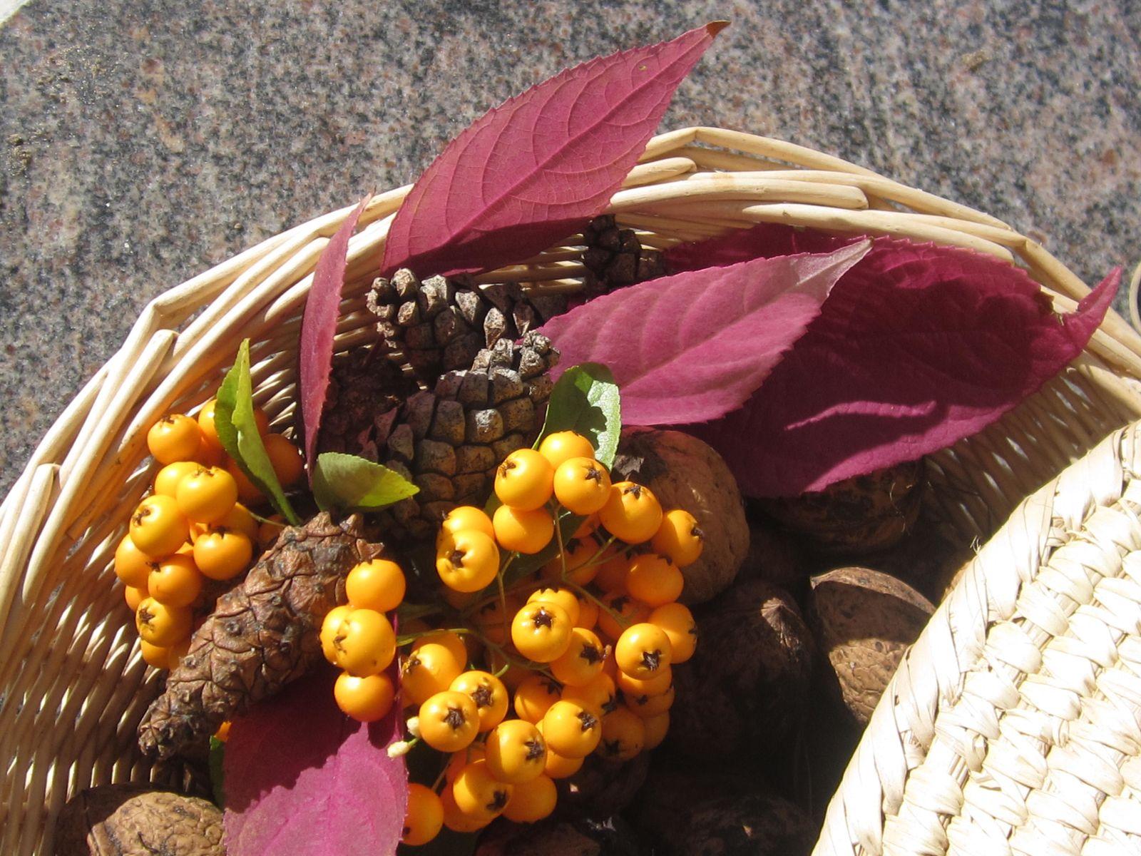 Noix , noisettes et fruits feront notre régal et celui des oiseaux.