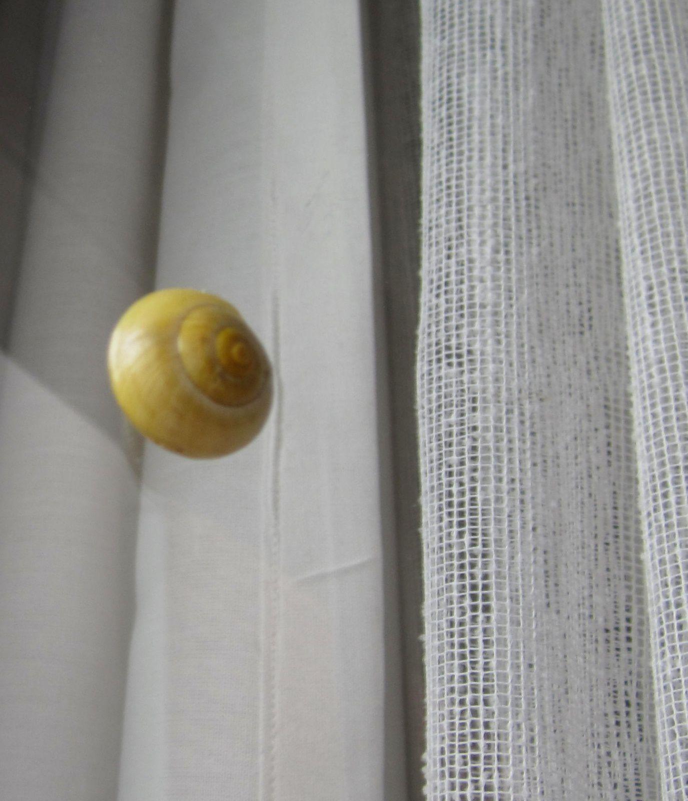 Et un escargot, qui escalade la vitre....et s'abstient de manger mes fleurs !!!