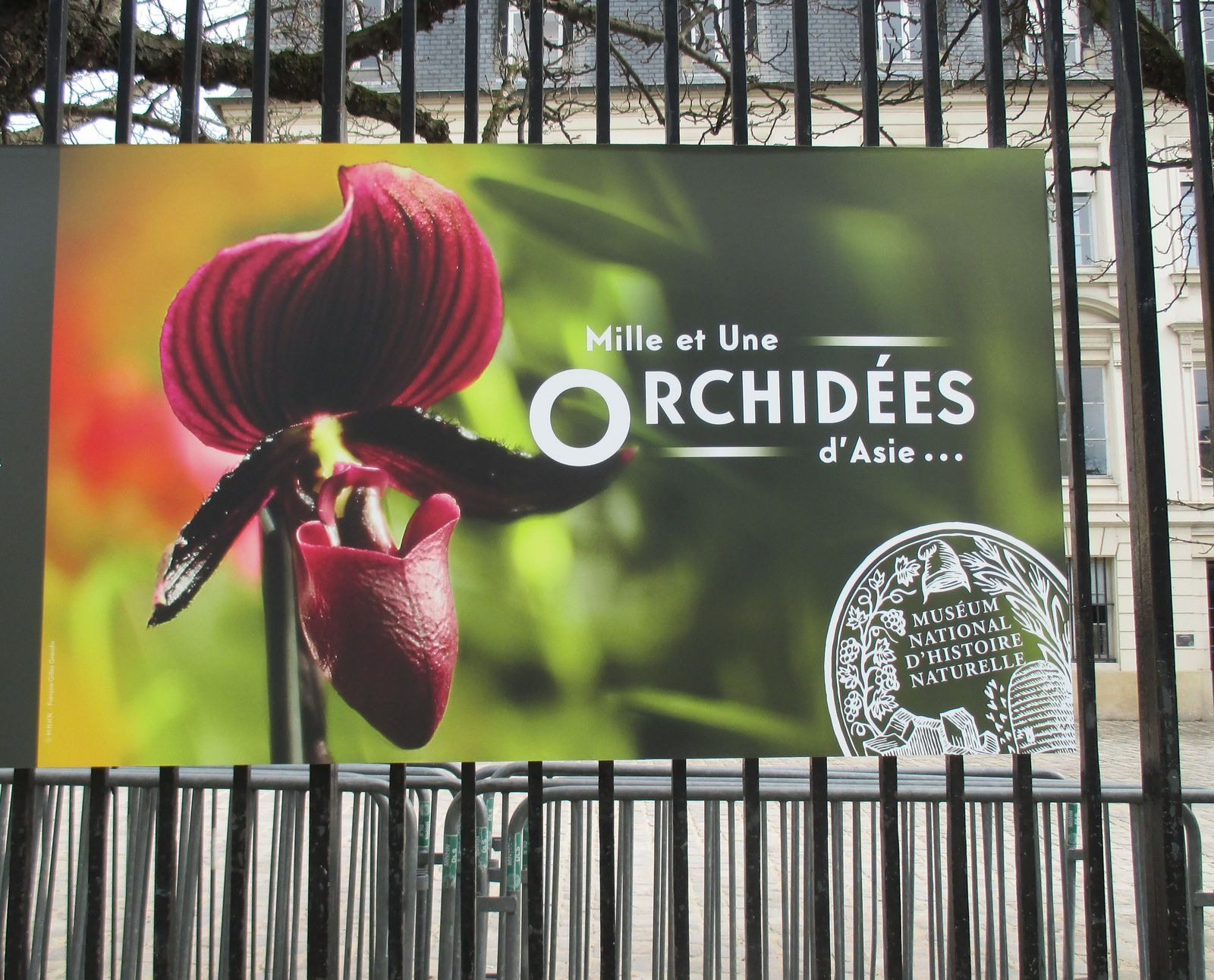 ORCHIDEES d'ASIE