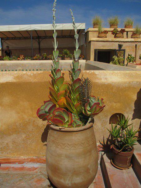 Le lieu est magique et de la terrasse nous admirons Marrakech.....