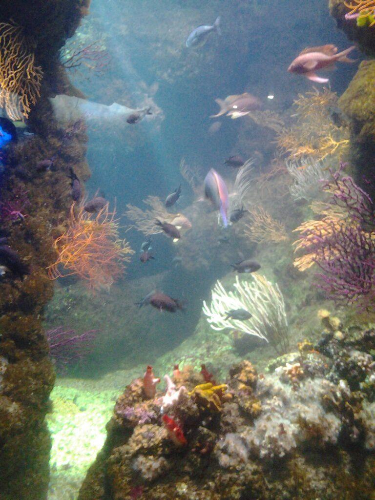 L ' Aquarium à La Rochelle