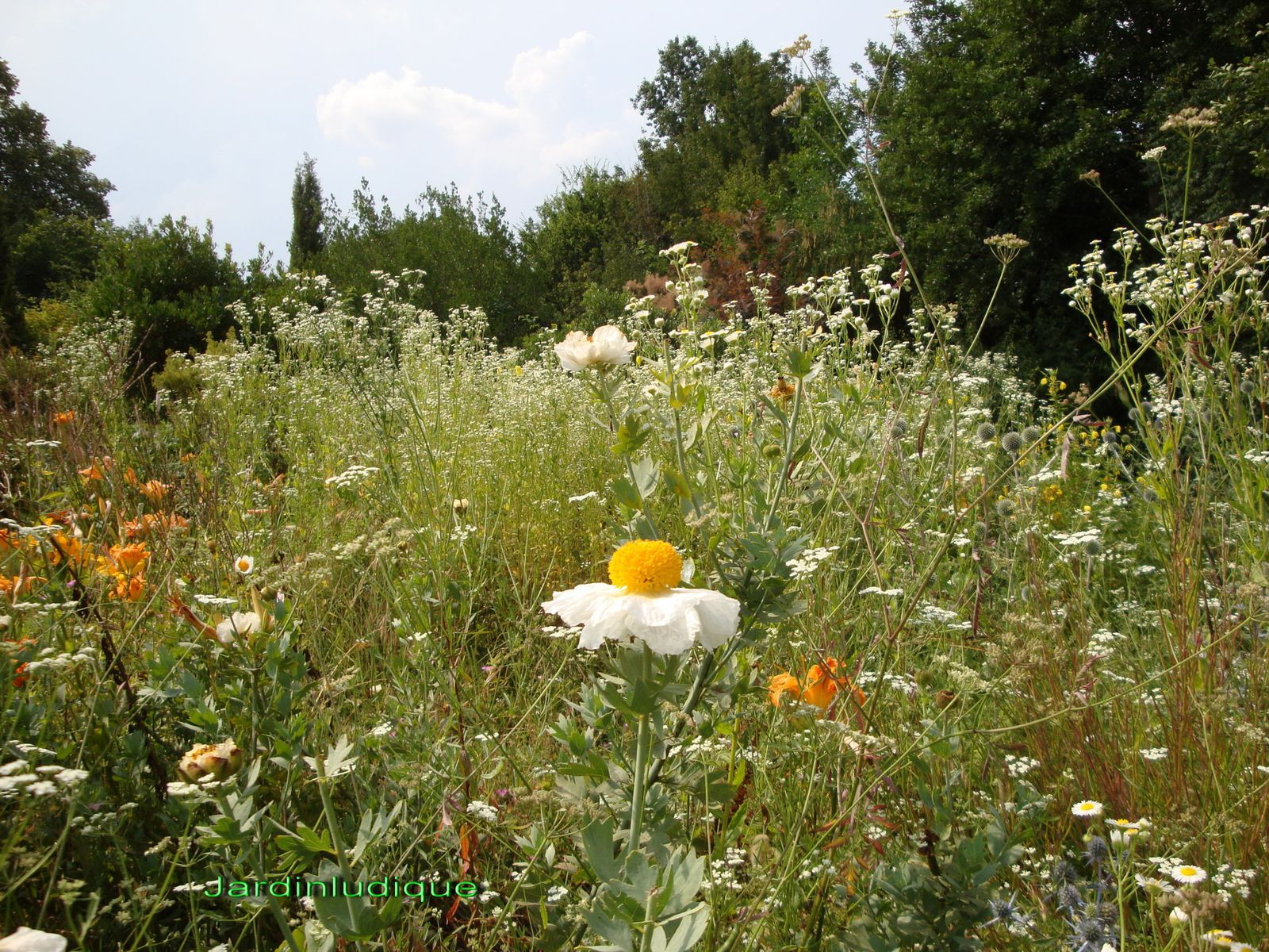 Le naturel au jardin le blog de claude lasnier for Jardin naturel