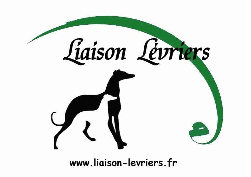 LIAISON LEVRIERS/NOS GALGOS A ADOPTER OU PRENDRE EN FA/LD