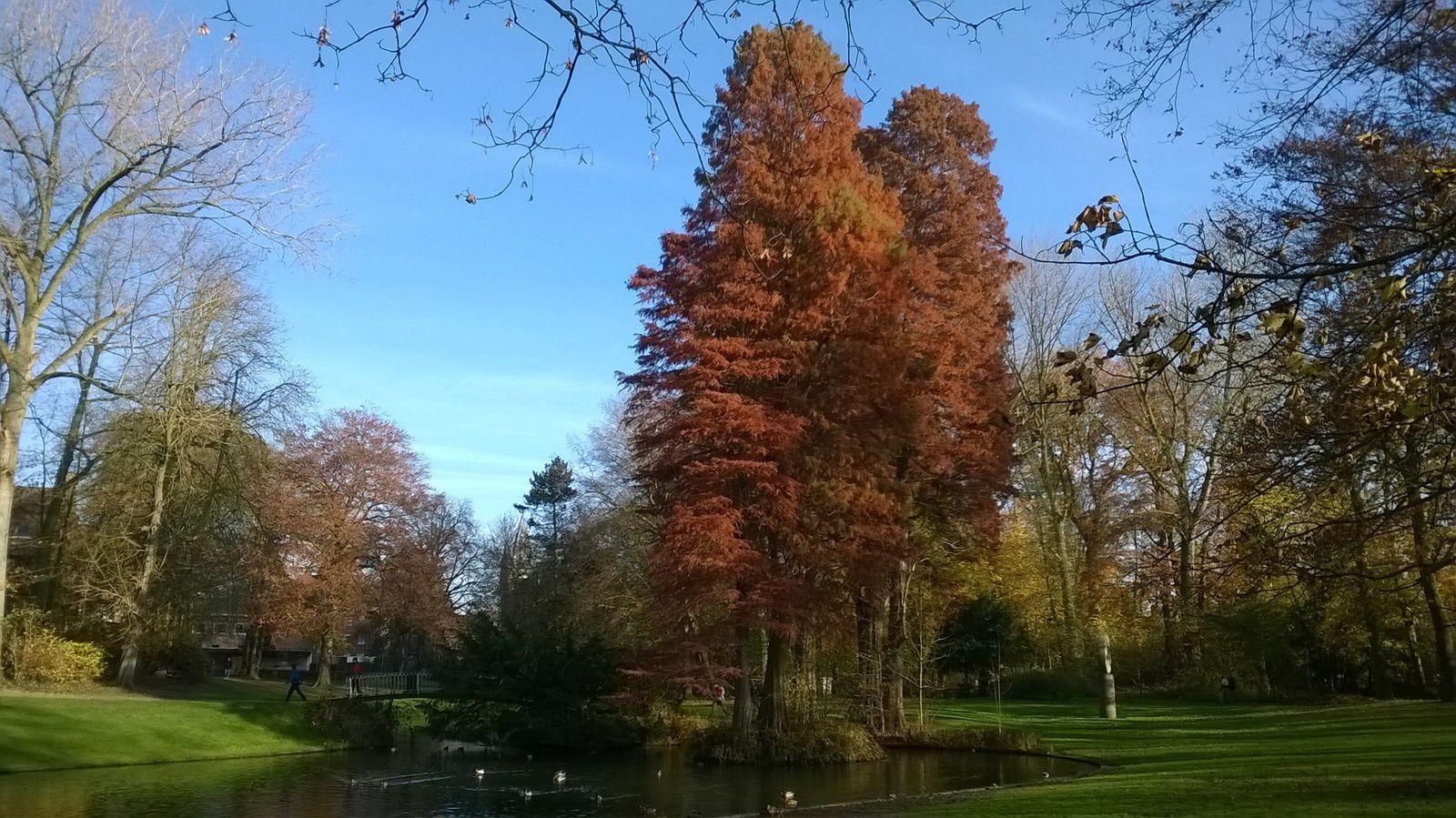 Journée idéale pour marcher dans la région flamande à Gullegem .