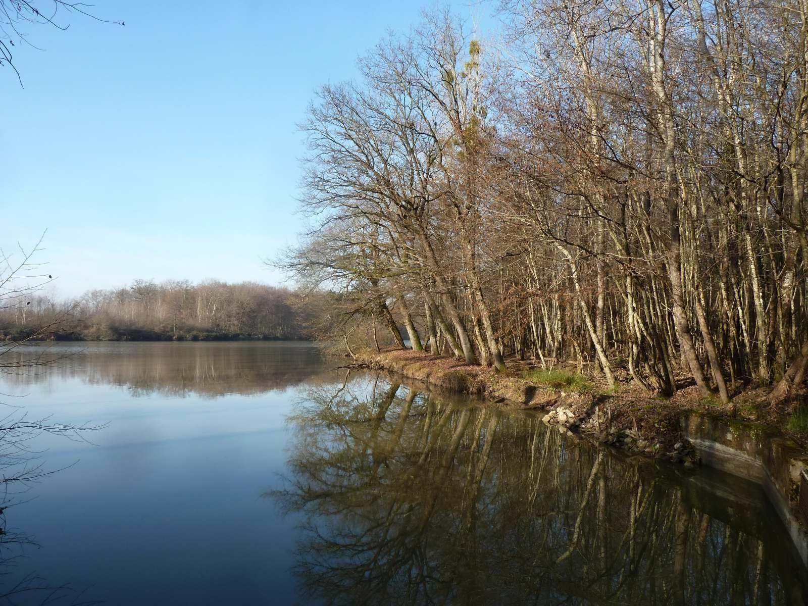 Gerland : sa forêt et ses étangs (17/12/2015)