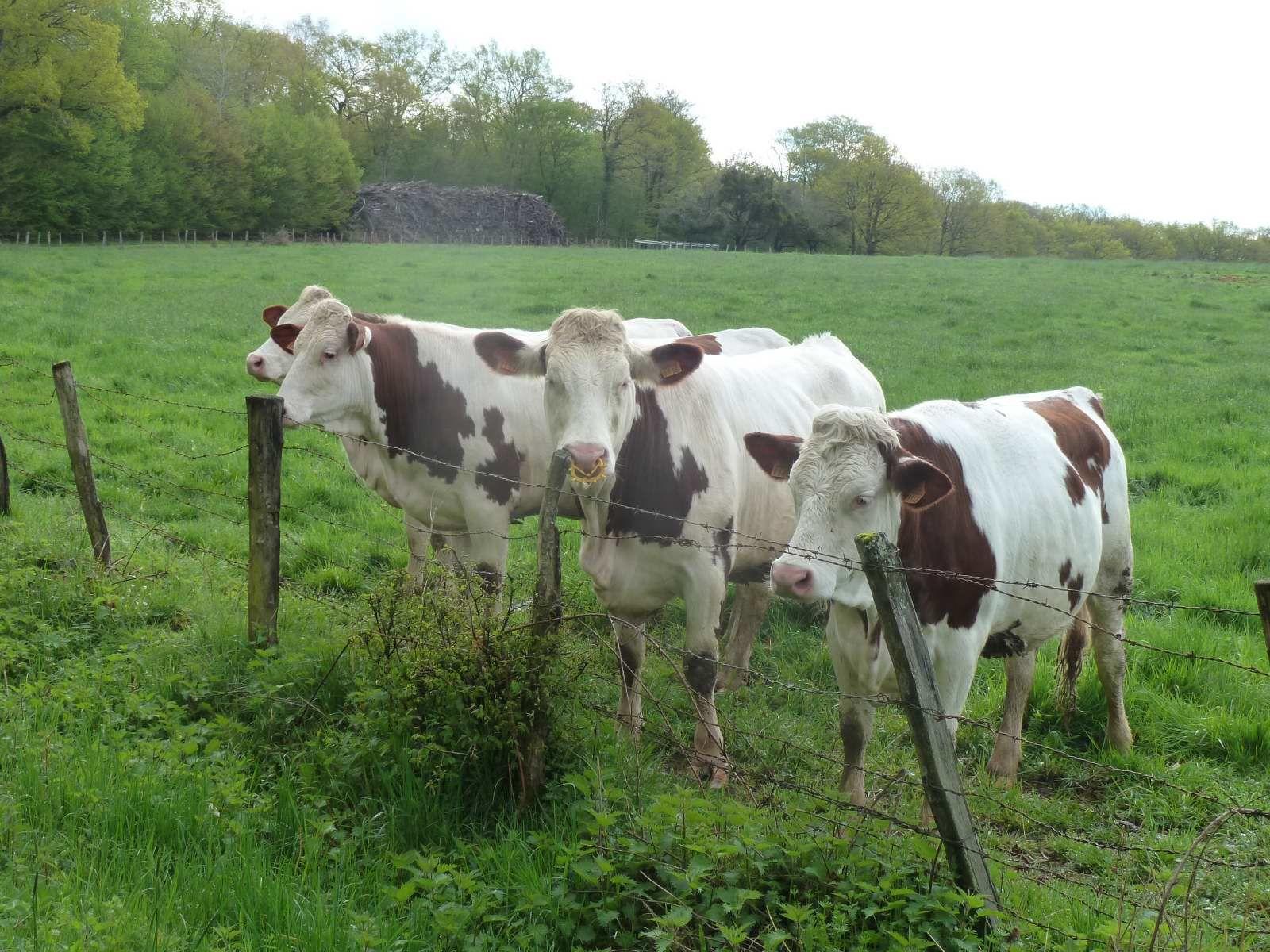 Les étangs de la Bresse Comtoise (14/4/2016)