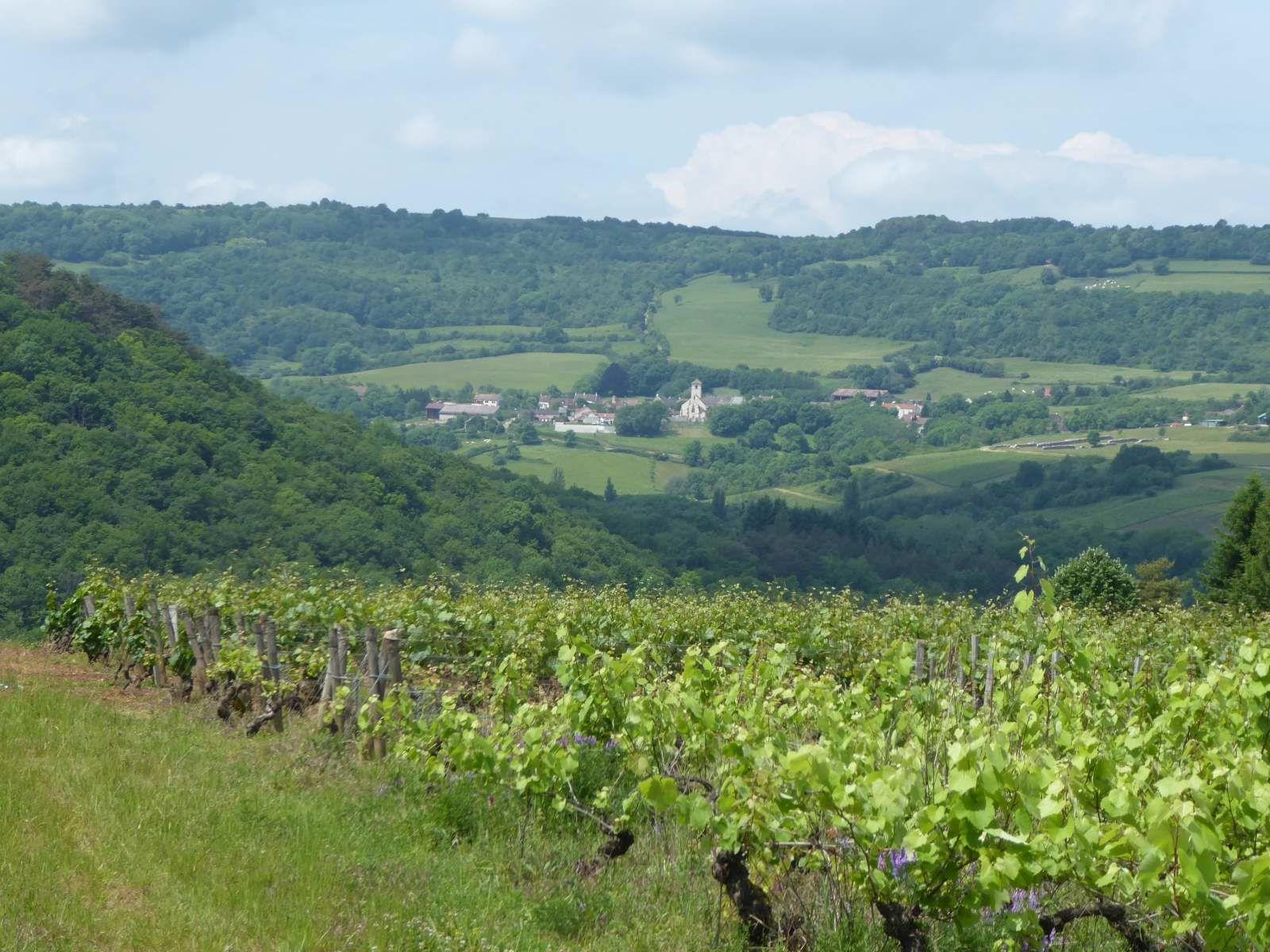 Des vignes de Pommard à la Montagne de la Chaume (1/6/2017)