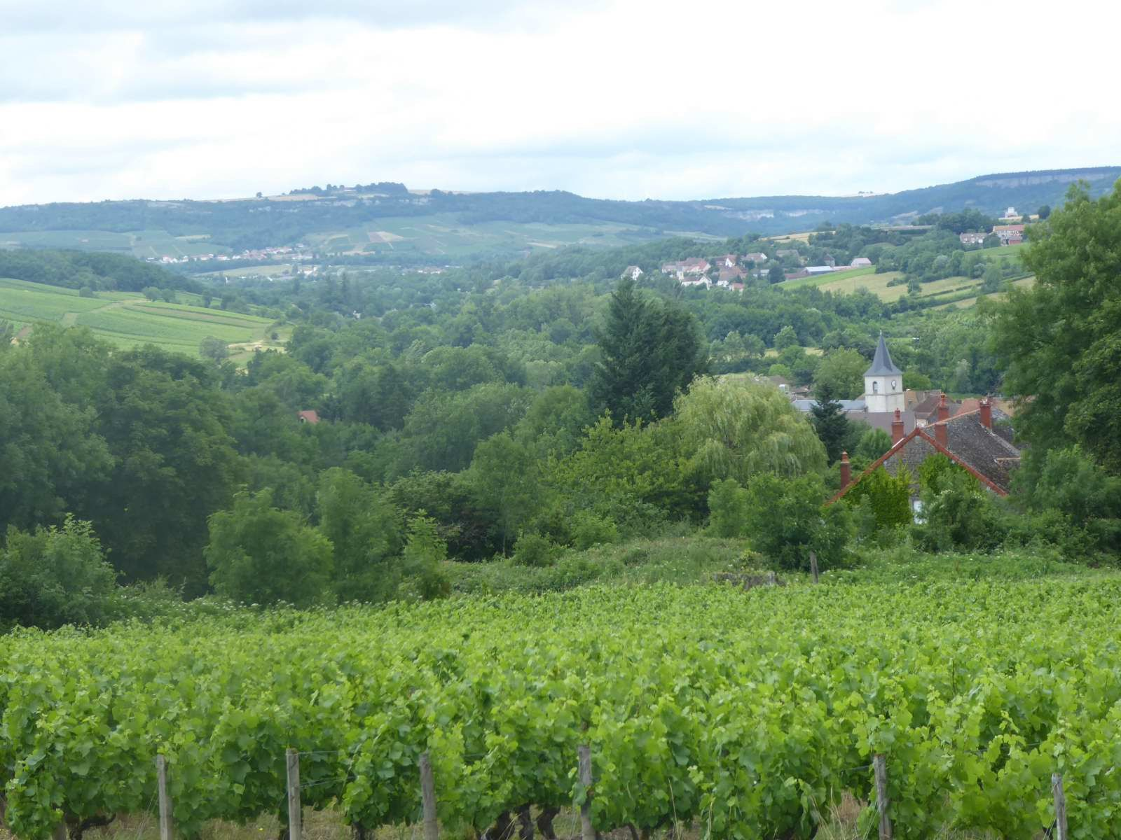 La vallée de la Cozanne (29/6/2017)