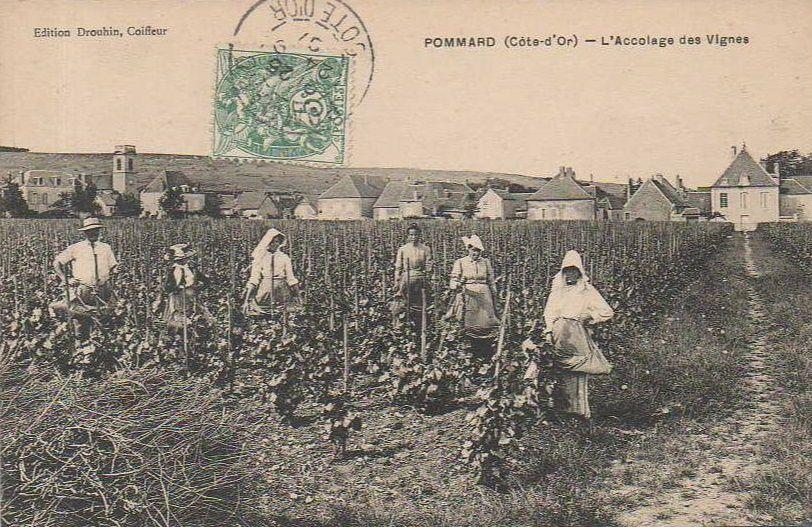 Pommard - Le Petit Bois, Rivot fils, Château de Pommard, Château Marey-Mongé, Cuverie, Bouilleur de cru, Vendanges - Pommard.