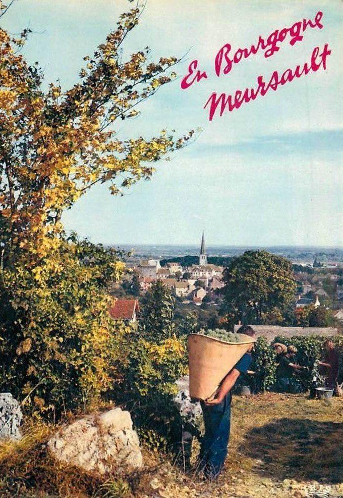 Meursault - Vignobles, Vendanges, Caves - Meursault.