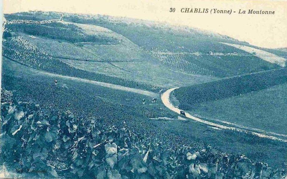 Chablis - Coteau de la Moutonne, Vallée de serein, Vallée de Vaudésir, Les Clos, Château de Grenouilles - Chablis.