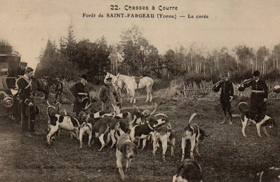Saint-Fargeau - Chasses à Courre, le Bat-l'eau, Hallali, les honneurs du pied, la curée, la Nappe du cerf, retour de chasse, fanfare et bouton - Saint-Fargeau.