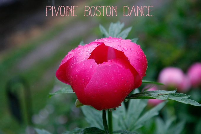 Pivoine boston dance