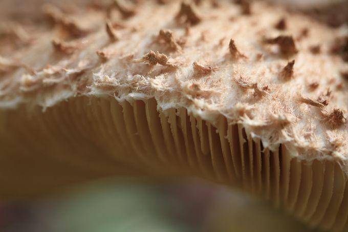 Détail d'un champignon