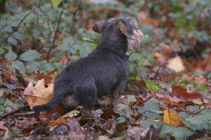 teckel kaninchen