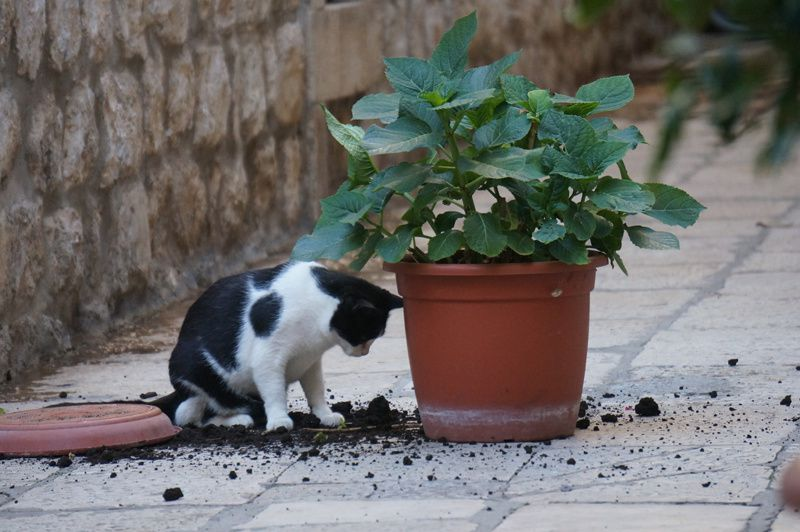 les chats de Dubrovnik