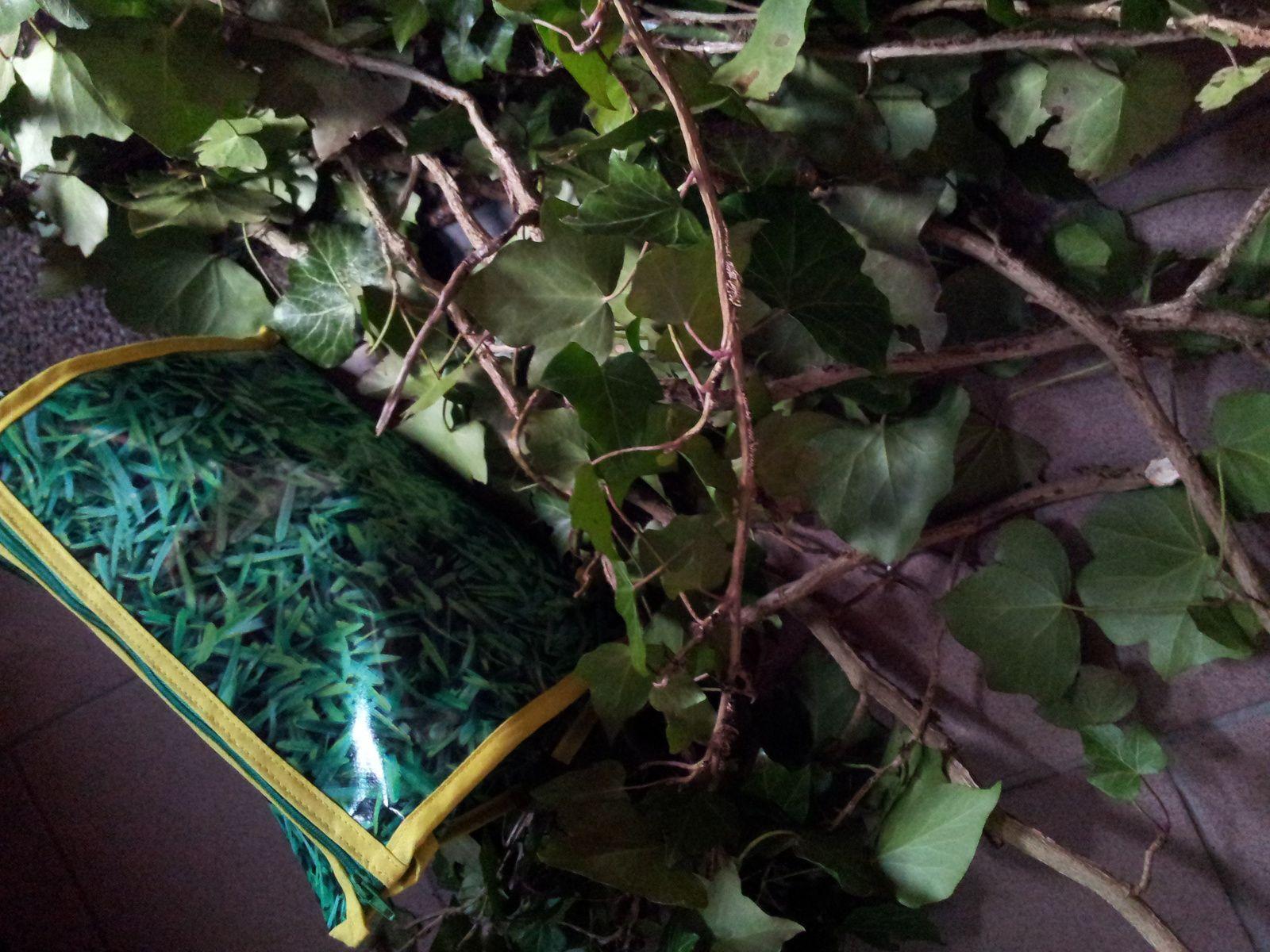 le végétal jusque dans la trousse à maquillage merci Télito!!! 26/01/2016