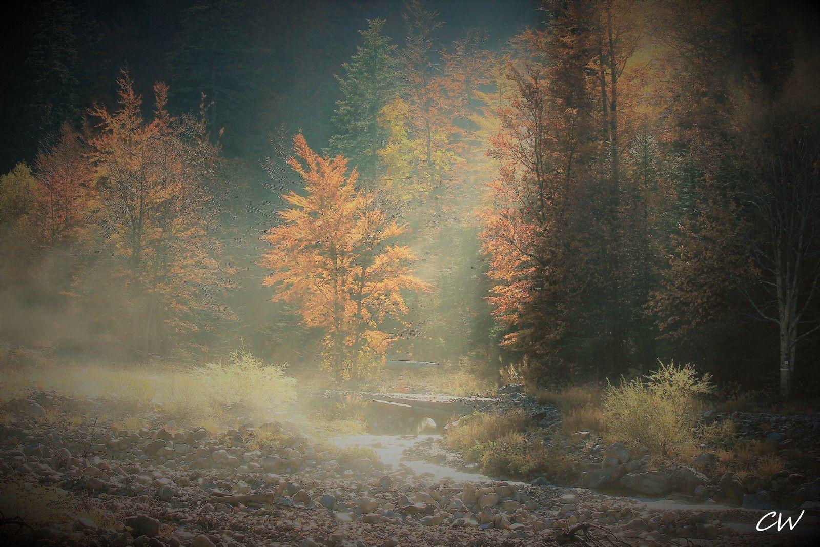 &quot&#x3B;l'appel de la forêt...&quot&#x3B;