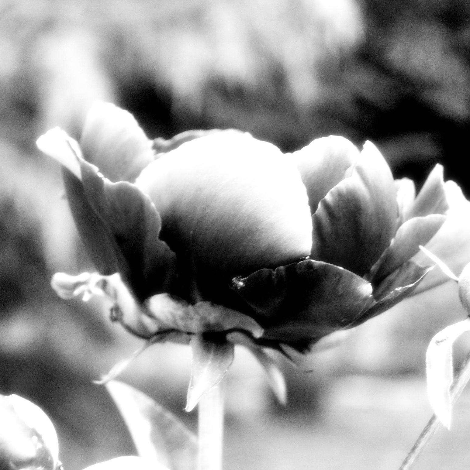 {Hello Spring}