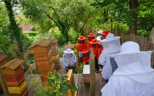 Courageux les petits mais pas toujours très rassurés en présence de toutes ces abeilles. Photos de Romain Gomez.