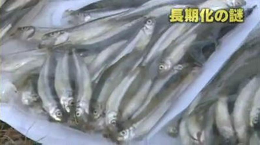 Contamination des eaux après l'accident de Fukushima